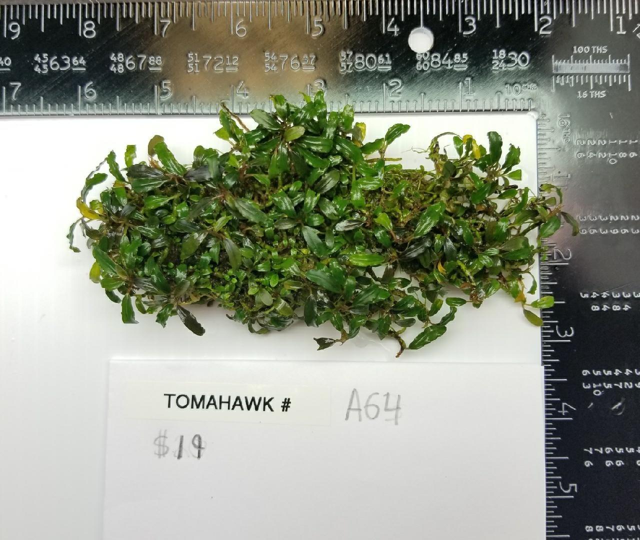 Tomahawk Buce