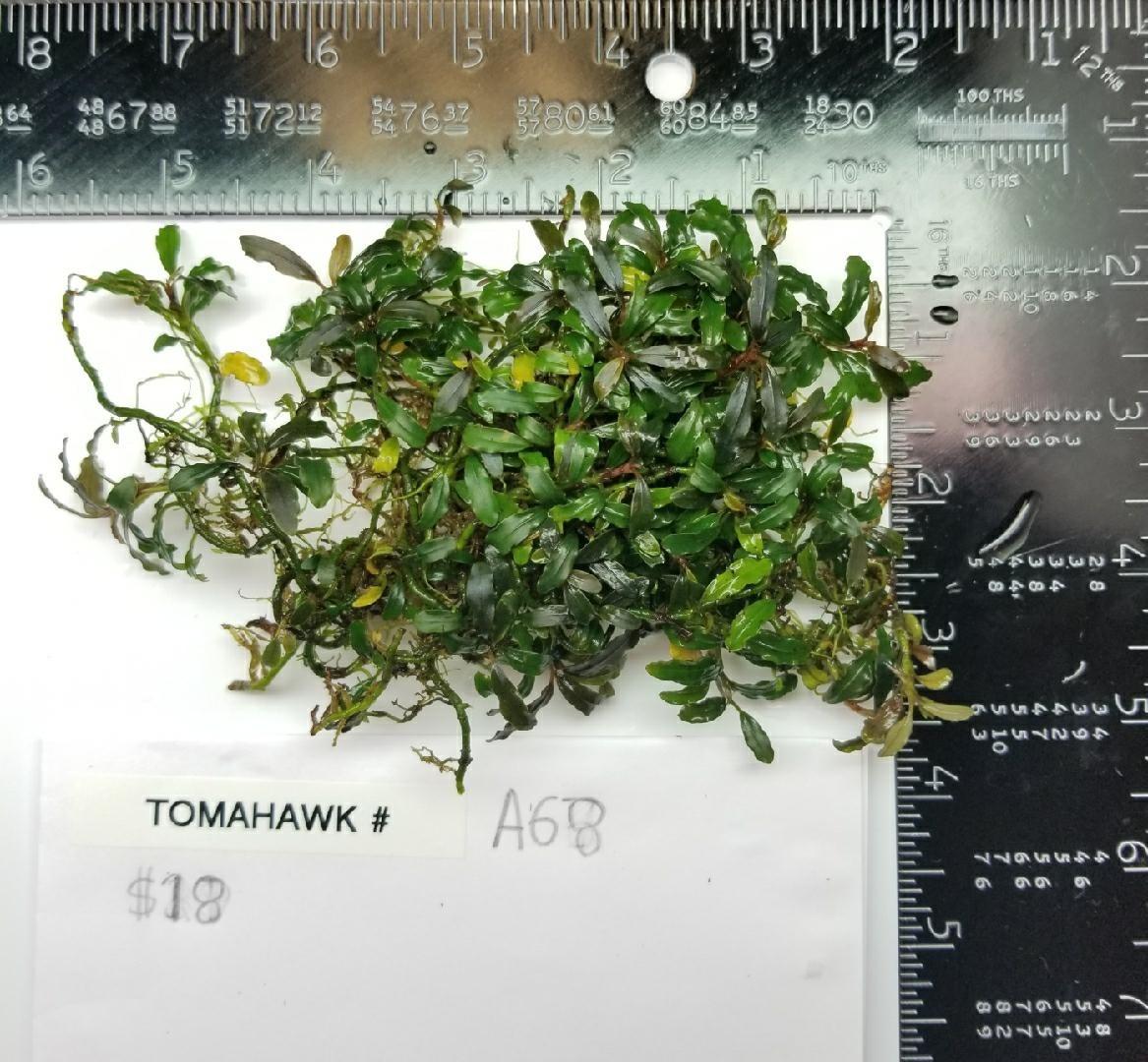 Tomahawk Buce - A68