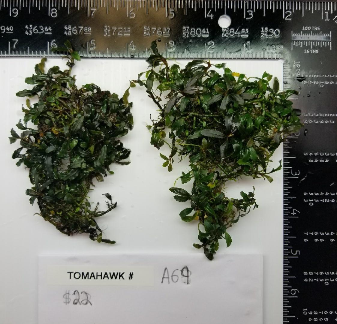 Tomahawk Buce - A69