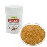 Stout - Borneo Wild