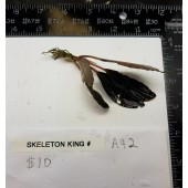 Buce Skeleton King